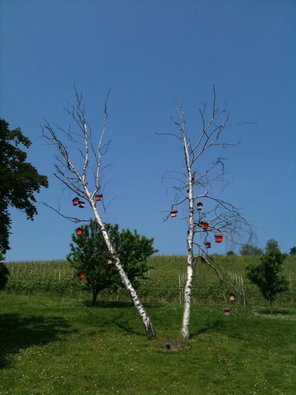 PO_Tree.JPG