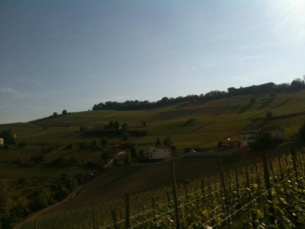 View_from_Le_Coste_Vineyard.JPG
